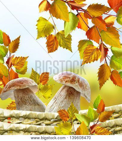 Autumn landscape. Beautiful leaves. landscape. Colorful trees
