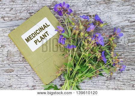 Medicinal plant Meadow geranium (Geranium pratense) and herbalist handbook. Used in herbal medicine is a good honey plant