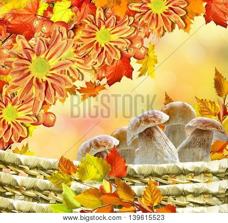 abstract background of autumn leaves . flowers chrysanthemum