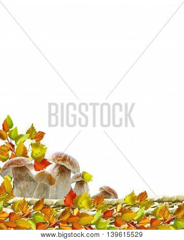 leaves isolated on white background. Golden autumn;