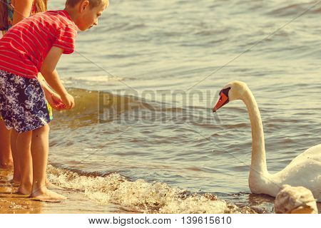 People and animals. Lovely charming kids family playing having fun with big white swan sea bird. Children spending time on fresh air on beach.