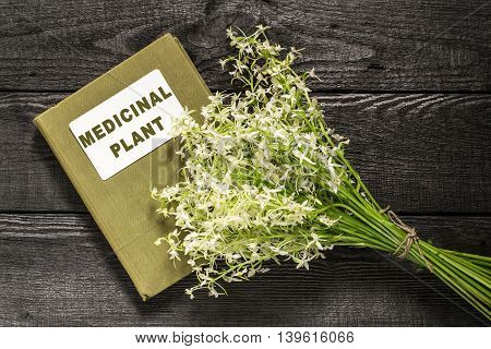 Medicinal plant wild orchid or Lesser Butterfly Orchid (Platanthera bifolia) and herbalist handbook. In herbal medicine are used roots. Rare plants some countries banned collection of raw materials