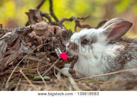 Cute little rabbit with red heart clothespin and exposed roots on hay on natural background