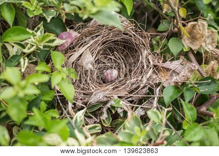 Close up old bird nest with one egg on tree
