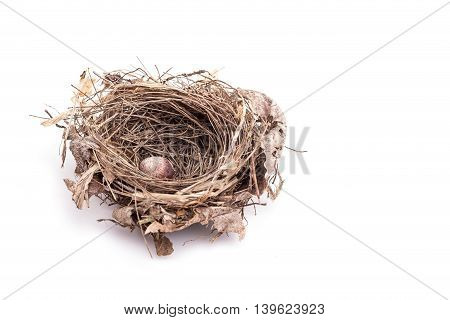Close Up Old Bird Nest With One Egg Isolated On White