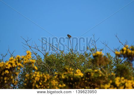 a bird perched on a branch against the backdrop of a blue sky