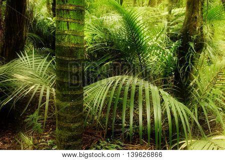 Lush green foliage in tropical jungle
