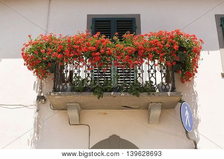 Red Carnation flowers growing on a balcony in Italy