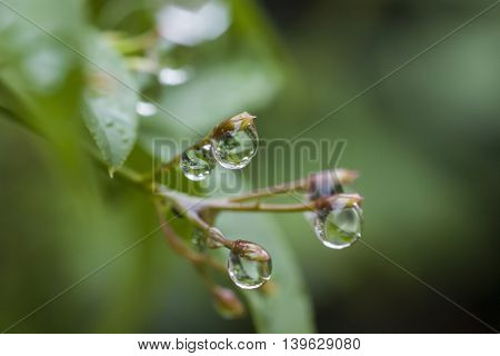 Raindrops with reflection background with shallow dof macro close up photo