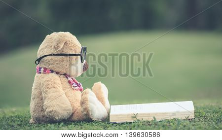 Lovely Brown Teddy Bear Wear Glasses With Book Sitting On Grass Field With Lens Flare. Warm Toning E