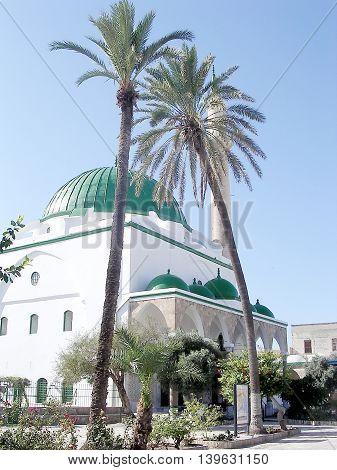 Palm Tree in front of El-Jazzr Mosque in Akko (Acre) Israel