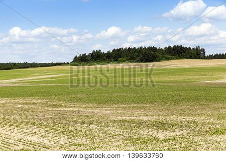 agricultural field on which to grow crops - beets. Spring. germ. blue sky