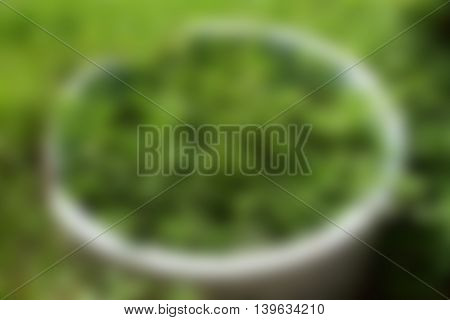 A green blur abstract background from nature.