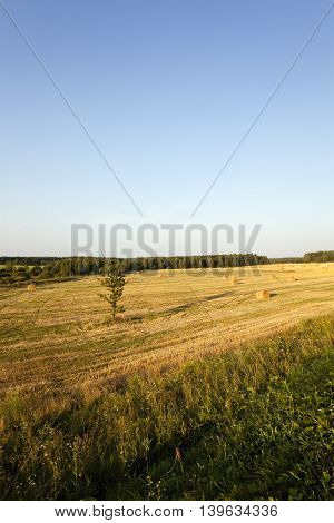 the photographed straw stack during the harvest company of cereals