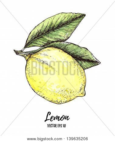 Hand Drawn Vector Illustration - Colorful Lemon. Citrus Fruit With Leaves. Watercolor