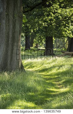 Beautiful Shallow Depth Of Field Landscape Of Lush Green Woodland In Summer