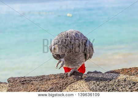 beautiful ara sitting on a wall at the beach promenade