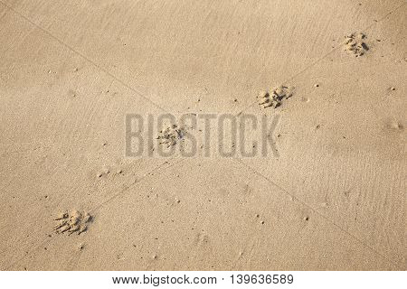 footsteps of a dog at the beach