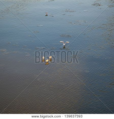 Ice floes on the river Main with pigeon texture