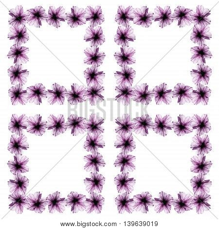 Beautiful floral background isolated purple petunia flowers