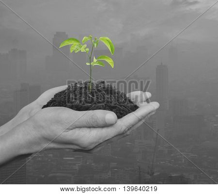 Hands holding a fresh small plant with soil over black and white pollution city Ecology concept