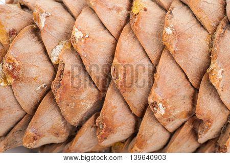 Cedar cone texture
