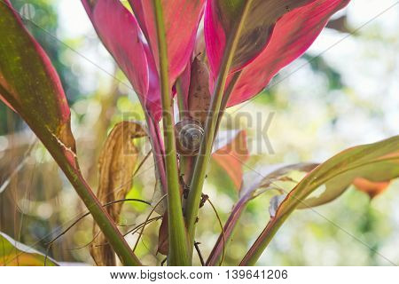 Snail in the leaves, tropical forest, Bali