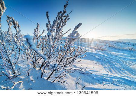 Deserted winter landscape Arctic tundra Taimyr Peninsula.