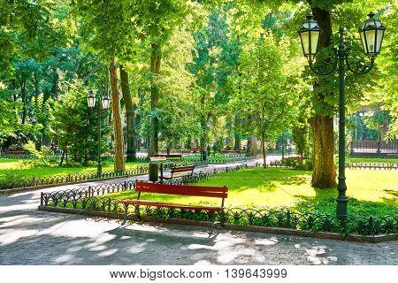 green city park at summer season, bright sunlight and shadows, beautiful landscape