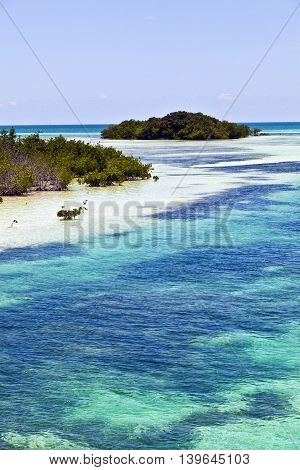 Beautiful Scenic Beaches And Clear Water In The Keys With Palmes And Mangroves