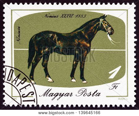 HUNGARY - CIRCA 1985: A stamp printed in Hungary issued for the bicentenary of horsebreeding at Mezohegyes shows Nonius XXXVI, 1883, circa 1985.