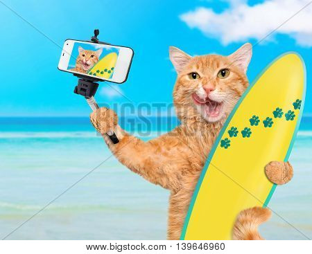Beautiful surfer cat on the beach taking a selfie together with a smartphone.