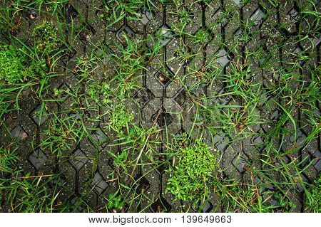 Green Wet Road After Rain