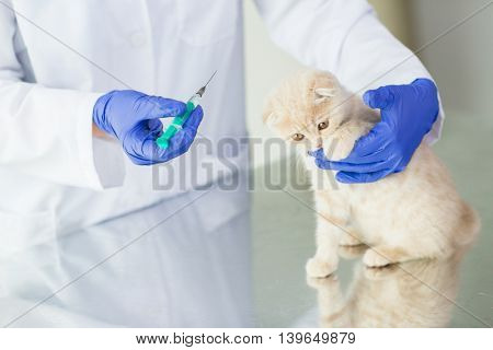 medicine, pet, animals, health care and people concept - close up of veterinarian doctor with syringe making vaccine injection to scottish fold kitten at vet clinic