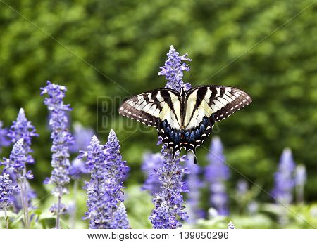Butterfly In The Green Nature