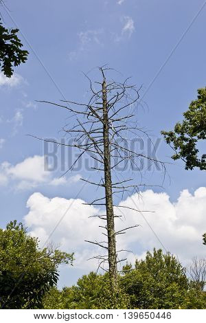Dead Tree In Dense Forest