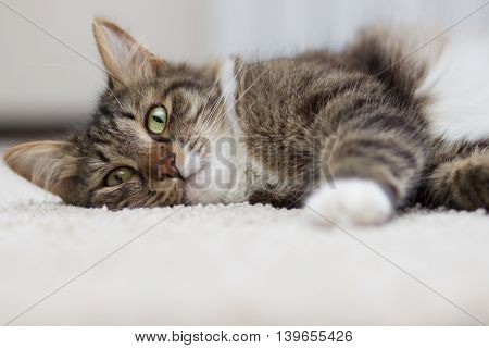 cat with green eyes lying on the carpet