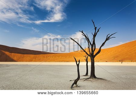 Dead trees and red dunes in the Dead Vlei Sossusvlei Namibia concept for travel in Africa