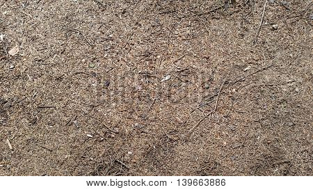 Brown Needles On The Ground