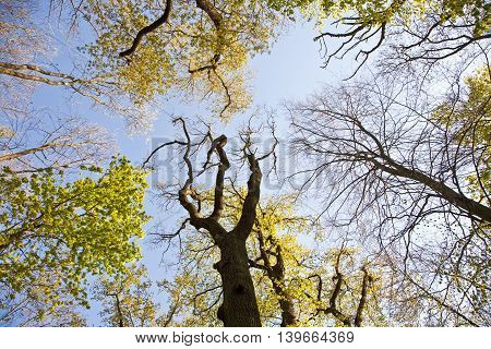 Crown Of Tree With Colorful Leaves