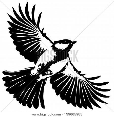 black and white paint draw tit bird illustration