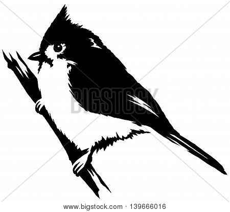 black and white paint draw cardinal bird illustration