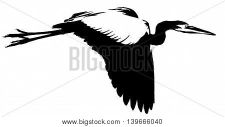 black and white paint draw crane bird illustration