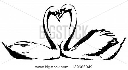 black and white paint draw swan bird illustration