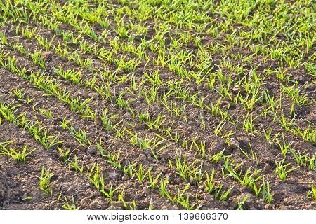 Background Of Newly Plowed Field