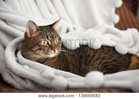Cute grey cat on chair