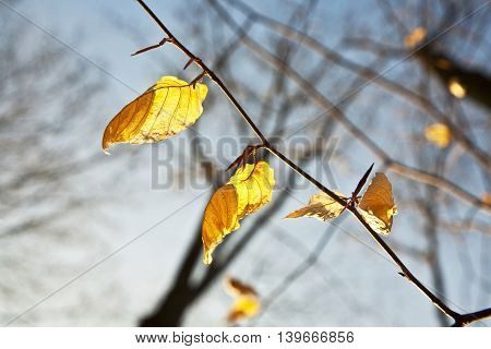 Golden Leaves At The Tree