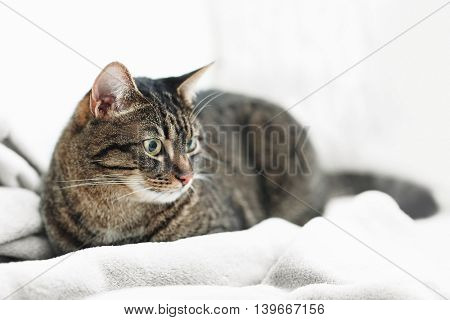 Cute grey cat on sofa in the room