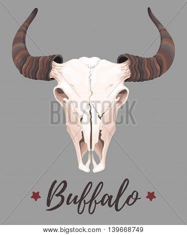 Vector illustration of high detailed buffalo skull
