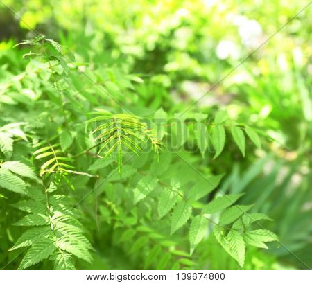 Green bush branches on blurred nature background